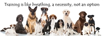 Heavenly Canines Certified Dog Training