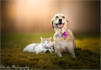 Shocks Photography  - Olympia Washington Pet Photographer